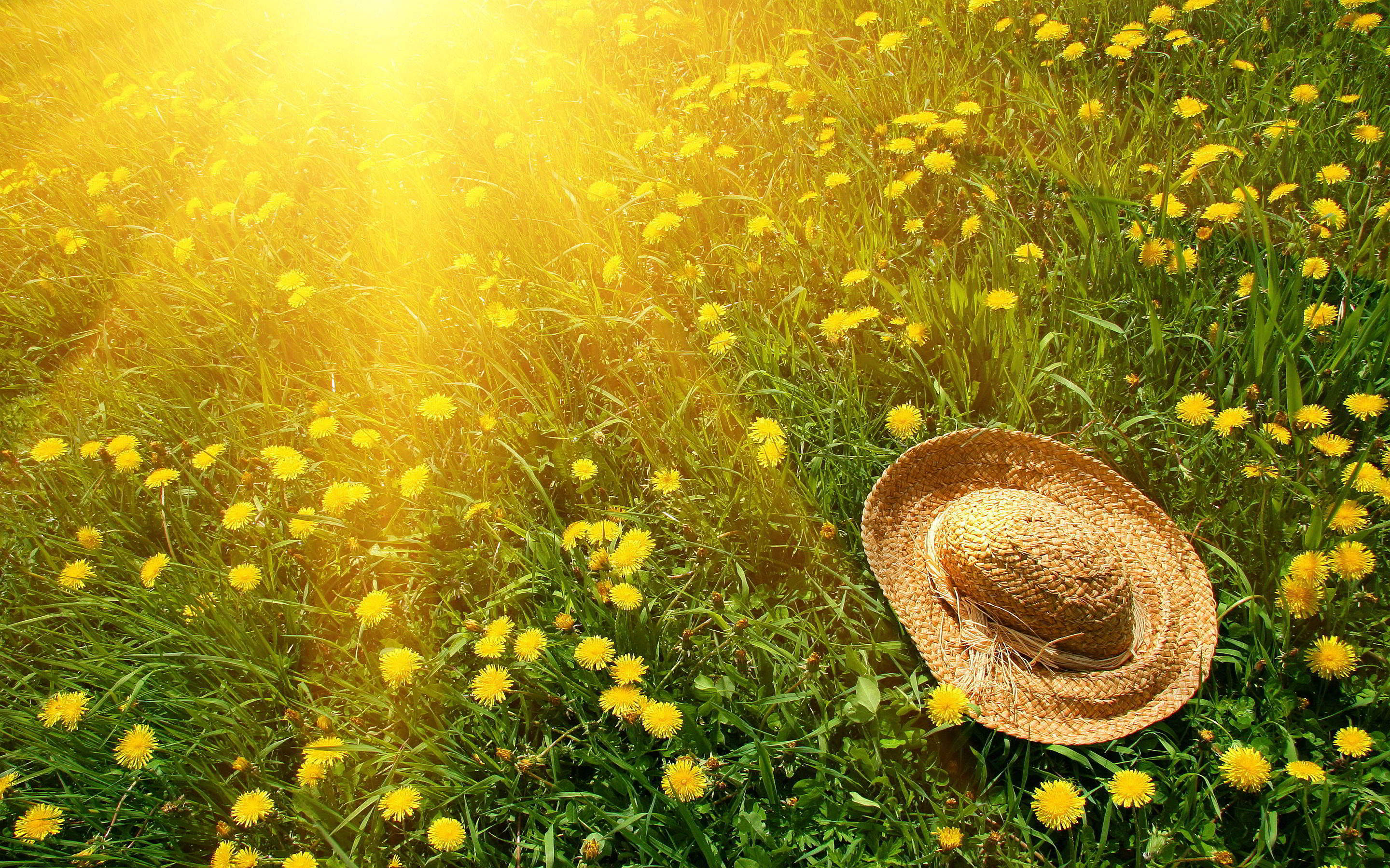 summer-sun-hat-in-a-field